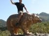 x-bear-rodeo