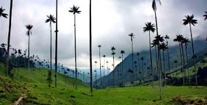 Kolumbien: Kaffee, Kokain und Kriminalität ?